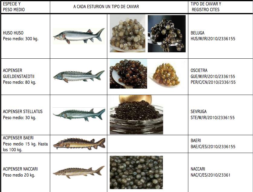 Tabla de tipos de esturión y sus caviares